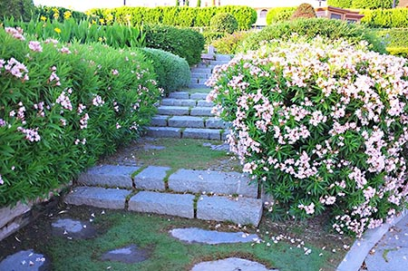 landscape design, drainage, lawn care, irrigation